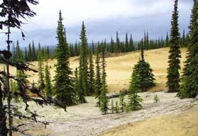 Koyukuk Wilderness