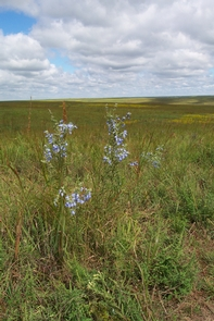 Fall wildflowers at the preserveFall is the season for another assortment of color on the prairie