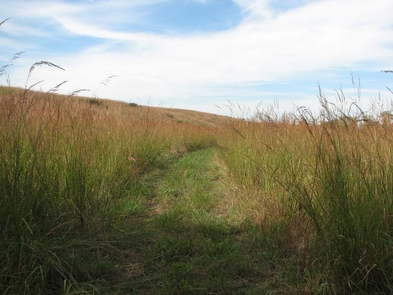 Hike among the tall grasses in the fallHike among the tall tallgrass species in the fall