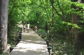 Trail on Theodore Roosevelt IslandHike the trails throughout Theodore Roosevelt Island for a grand adventure.