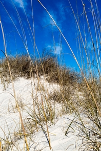 Nana dune at American BeachThe sand dune at American Beach is a protected part of the Timucuan Preserve.