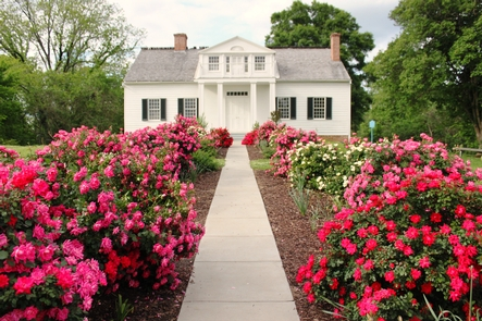 The Shirley HouseRoses in bloom in front of the Shirley House, the only remaining Civil War structure in the park.