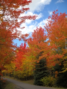 Fall ColorsThe mix of hardwood and conifers create inspiring scenic views especially in the fall.