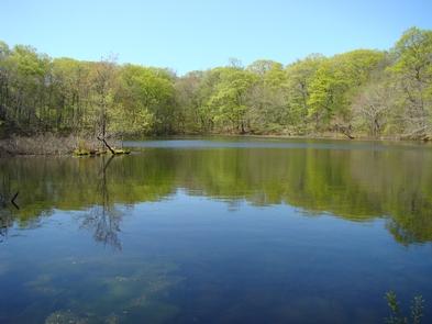 Weir PondWeir Pond was built in 1896 after Julian Alden Weir won 1st prize at the Boston Art Club Exposition.