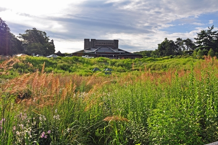 Dimple MeadowIn 2012, park staff and volunteers planted 42 species of native grasses and wildflowers here to create a habitat that now supports over 40 kinds of bees and 25 types of butterflies.