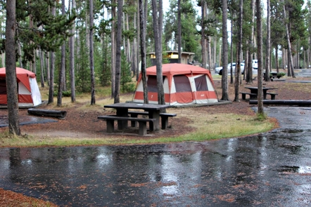 Tent sites at the Madison Campground