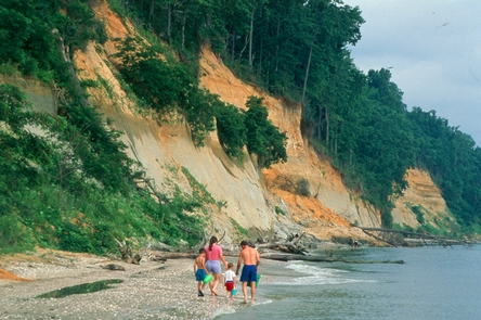 Calvert CliffsCalvert Cliffs is a well known destination for fossil hunting.
