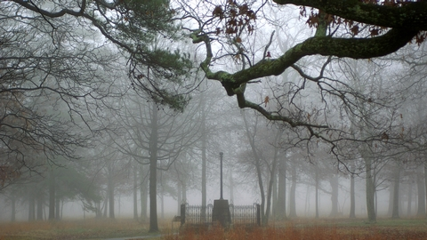 Washington Light Infantry Monument in the Fog