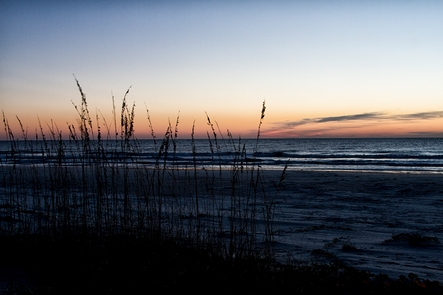 Undeveloped CoastCumberland Island National Seashore encompasses nearly 18 miles of undeveloped beach offering recreation for visitors and essential nesting area for birds and sea turtles.