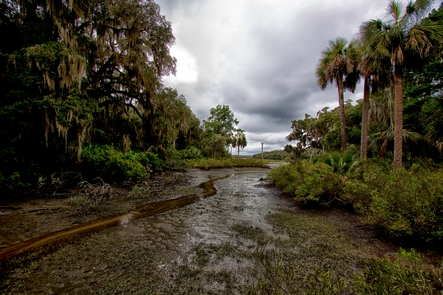 Preview photo of Cumberland Island National Seashore