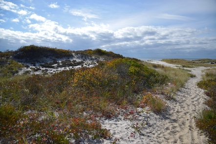 Fire Island WildernessUnparalleled opportunities for solitude and recreation can be found in New York State's only federally designated wilderness, the Otis Pike Fire Island High Dune Wilderness.