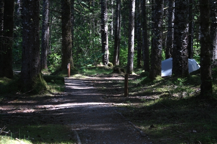 A serene locationThe Bartlett Cove Campground is a serene spot. Where else in the world can you camp in the woods and hear the breathing of whales?