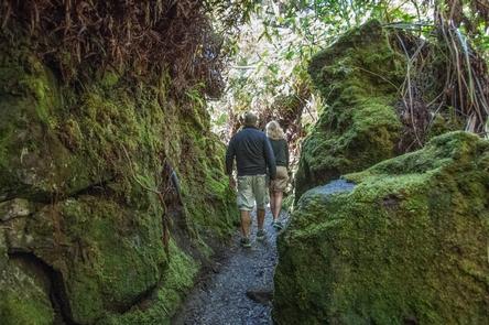 Halema'uma'u TrailA couple hikes the Halema'uma'u Trail through rain forest from the summit of Kilauea to the caldera fllor.
