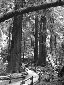 Bridge through Muir WoodsSummer is a busy time at Muir Woods. Visit early in the morning for the most pleasant experience.