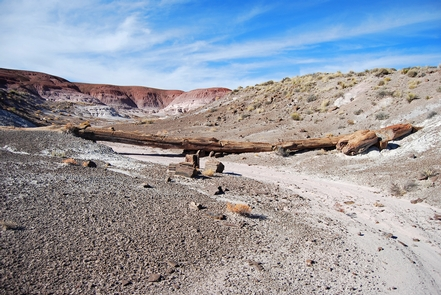 Onyx Bridge, Petrified Forest National Wilderness AreaOnyx Bridge is a popular destination for hikers in the Petrified Forest National Wilderness Area's north unit.