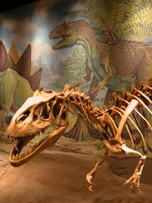 Bones and Interactive ExhibitsA wealth of geologic, paleontologic, archaeologic and biologic specimens are displayed.