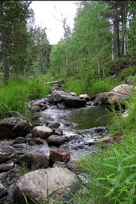 Green MountainA creek runs along a rock bed amongst green aspen and pine trees.