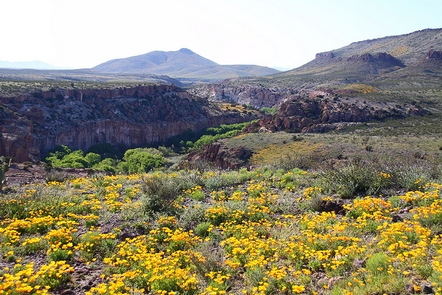 Gila Lower Box CanyonThe Gila Lower Box Canyon with a field of flowers in the foreground.