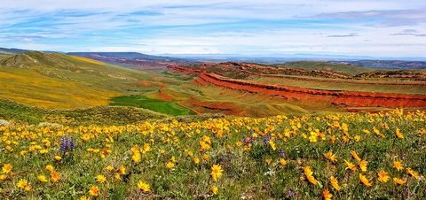 Red CanyonA beautiful view of bright red sandstone emerging from green grass  in a canyon with yellow and purple wildflowers in the forefront.