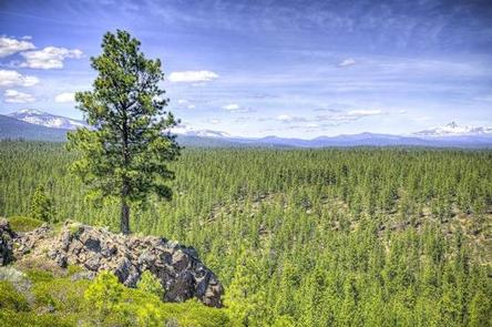 Preview photo of Driftwood Campground - Deschutes