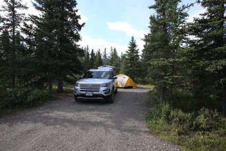 Tent Camping at TeklanikaCampers may use RVs or tents at Teklanika in most years. Occasional bear incidents may cause restrictions on tent-camping, but such events are rare (and unpredictable).