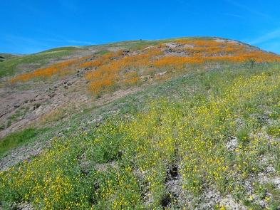 Tumey Hills Wildflowers