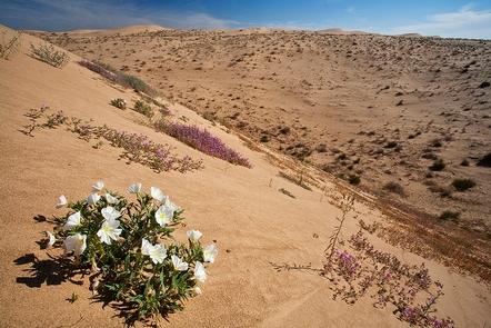 Springtime Wildflowers bloomWildflowers bloom on a sand dune.