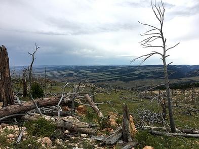 Gardner Mountain WSA backcountry photo