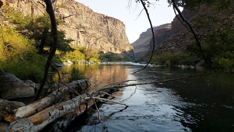 Lower Crooked RiverTrees fallen in the canyon of the Lower Crooked River.