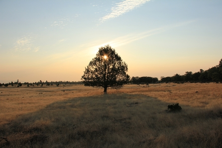 Sole Western Juniper tree in meadowSun setting over the Lower White River Wilderness.
