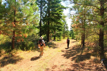 Hiking in the Lower White River Wilderness.Two hikers in the Lower White River Wilderness.