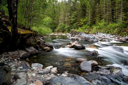 View of Quartzville Creek Wild and Scenic River