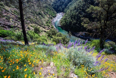 North Fork American RiverScenic wildflower and river view
