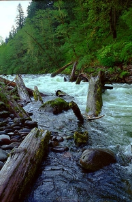 Sandy Wild and Scenic RiverSandy River log jam