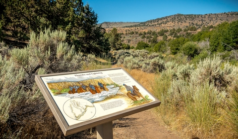 Donner ьnd Blitzen Wild and Scenic RiverInterpretive panel at Page Springs Campground