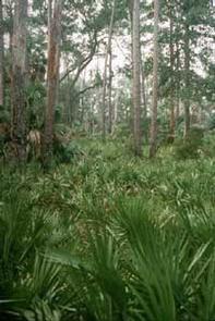 Blackbeard Island Wilderness