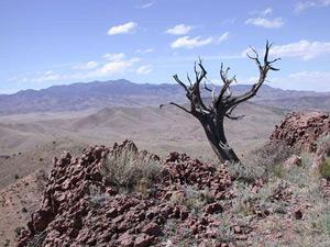 Bosque del Apache Wilderness