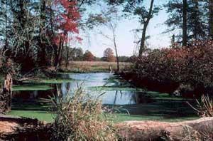 Great Swamp National Wildlife Refuge Wilderness